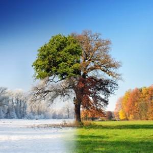 4-Seasons-540x540