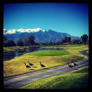 Birdie!! Westin Mission Hills Pete Dye course.